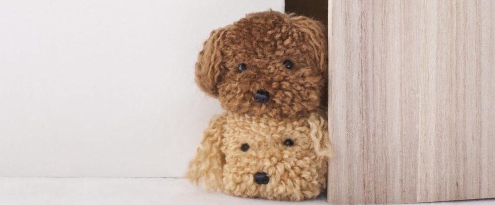 見つめてくる2匹の犬